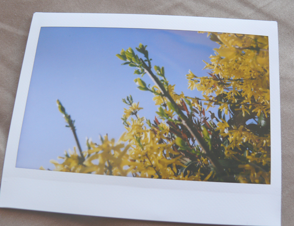 polaroid-fleurs