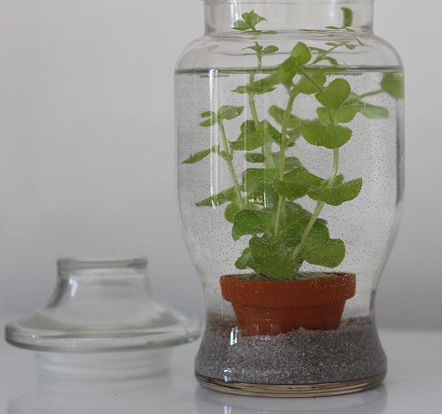 aquarium-plantes-2