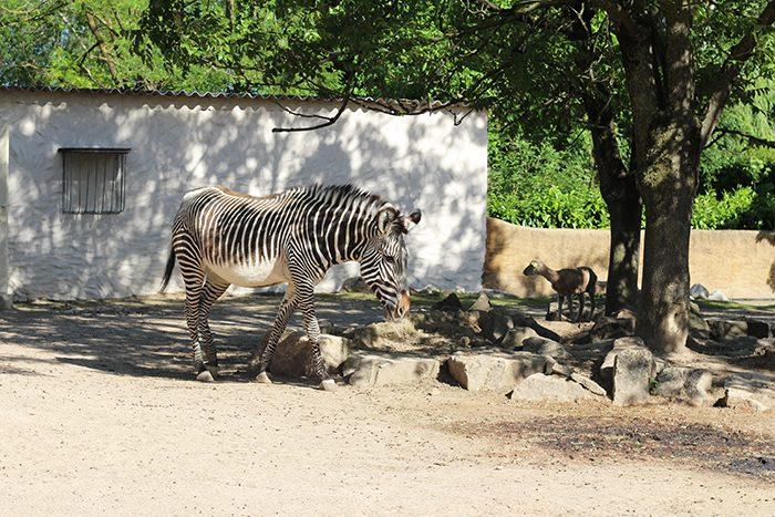 touroparc-zoo-1